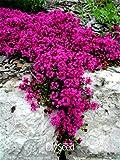 損失プロモーション!100個/ロットスカーレットクリーピングタイムの種子家宝非GMO家宝グラウンドカバーの花の種子