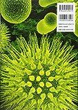 美しい電子顕微鏡写真と構造図で見るウイルス図鑑101 画像