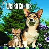 Welsh Corgis 2017 Calendar
