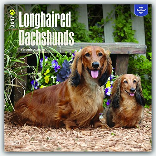 Longhaired Dachshunds 2017 Calendar