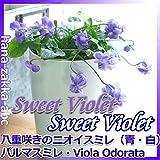 やわらかな陽ざし パルマすみれ 3.5号鉢【花苗】 【春の香り】 (青)