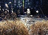 水彩画 燦めきの小径 画像
