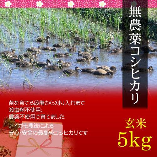 【母の日プレゼント・カード付】無農薬米コシヒカリ 5kg 玄米・贈答箱入り/ギフトにアイガモ農法で育てた安全な新潟米