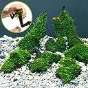 (水草)巻きたて ジャイアント南米ウィローモス 流木 SSサイズ(無農薬)(1本) 本州 四国限定 生体