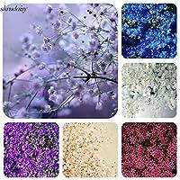 パープル:新しい素敵な愛らしい花の香りが咲くスターフラワーシードS5Dy