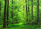 絵画風 壁紙ポスター 森林 森林浴 緑 目の保養 気分転換 癒し (はがせるシール式) キャラクロ SNR-001A1 (A1版 830mm×585mm) 建築用壁紙+耐候性塗料