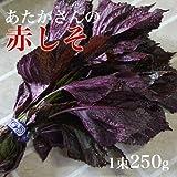 赤しそ 赤紫蘇 1束 福岡県産 福岡県認定エコファーマー