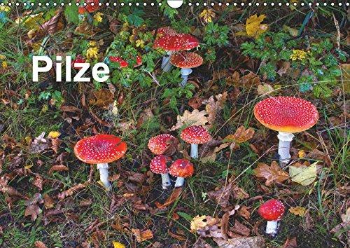 Pilze (Wandkalender 2019 DIN A3 quer): Eine Auswahl fotogener Pilze (Monatskalender, 14 Seiten )