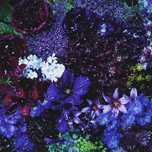 【Aimer】人気歌詞ランキングTOP10!!歌詞の意味と共に紹介♪「ONE」や「花の唄」の順位は?の画像