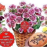 母の日ギフト カーネーション鉢花とスイーツセット 花とスイーツ (06.オルフィカ)