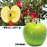 国華園 果樹苗 リンゴ 百年ふじ&王林(受粉樹) 2種2株
