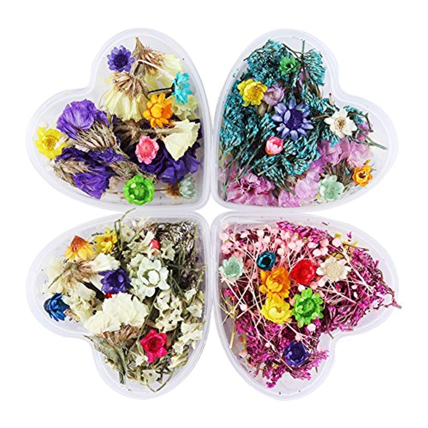 モンク葉を拾う荒らすBORN PRETTY 押し花 ドライフラワー 4ボックスセット 3Dネイル ハーバリウム 花材 レジンデコレーション カラージェルネイルDIYデコレーション飾り用品 (セット4) [並行輸入品]