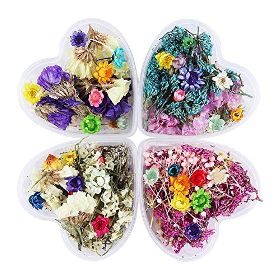置き場排除確保するBORN PRETTY 押し花 ドライフラワー 4ボックスセット 3Dネイル ハーバリウム 花材 レジンデコレーション カラージェルネイルDIYデコレーション飾り用品 (セット4) [並行輸入品]