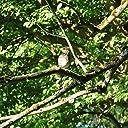 Early Morning Island Birds