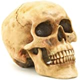 Gifts & Decor Grinning Realistic Human Skull Home Statue (36245)