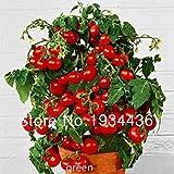 パック100の種子盆栽トマトの種子ミニチェリー鉢植え甘いフルーツ野菜オーガニックフレッシュ