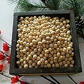 平成28年 熊本県産 大豆 10kg 業務用 品種:フクユタカ