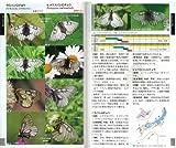 フィールドガイド 日本のチョウ (日本産全種がフィールド写真で検索可能) 画像