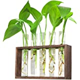 Ivolador Wall Mounted Hanging Planter Test Tube Flower Bud Vase Tabletop Glass Terrariumin Wooden Stand Perfect for Propagati