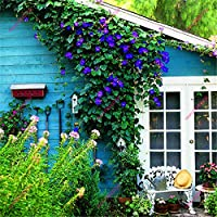 朝顔の種レアペチュニア種子青い花の種朝顔の種ホーム