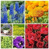 Rainbow Land - Seeds of 7 Flowering Plants' Species - 7 Seed Packets