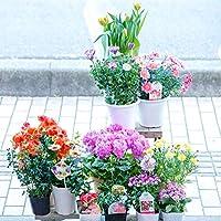 【マケプレお急ぎ便対応】季節の鉢物福袋セット 何が入っているかは届いてからのお楽しみ! ガーデニングや寄せ植えに最適 鉢花 鉢植え 苗物 フラワーギフト 早い者勝ち!いろいろな色・種類・価格帯が選べます! 開店祝い 新築祝い 誕生日祝い ガーデニング 春の寄せ植え primeお急ぎ便 (LLサイズ(16~18個のおまかせ))