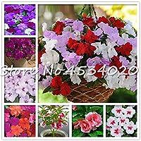 販売! 100個バルサム花盆栽インパチェンスBalsamina盆栽花、簡単に成長することToutch・ミー・ノットフラワーのホームガーデンの植物:MIXED