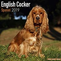 English Cocker Spaniel Calendar 2019 (Square)