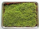 【苔盆栽】スナゴケミニパック(L)(256×189mm)
