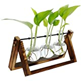 Leorealko Hydroponic Glass pots,hydroponic Plants,Tabletop Plants,Hydroponic Glass Planter Bulb Vase with Wooden Stand Tray T