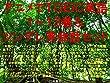 アニメでTOEIC英語1~13巻&ツンデレ英会話セット(天使の3P、メイドインアビス、けもフレ、ソードアート・オンライン、リゼロ、シュタゲ、東京喰種、黒バス、ブリーチ、ワンピ、ナルト、ひなこのーと、武装少女マキャヴェリズム、サクラダリセット、月がきれい、正解するカド、ダンまち、ロクでなし、エロマンガ先生、すかすか、ゼロの書、Re:CREATORS、アリスと蔵六、つぐもも、FAG、クロプラ、クラクエ ...