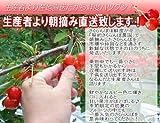 母の日 ギフト サクランボ 佐藤錦 L玉 秀品 24粒 ギフトボックス 花とフルーツ さくらんぼ カーネーション