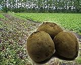 赤ビーツ 無農薬 4kg 北海道産