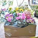 【マケプレお急ぎ便対応】店長おまかせ 季節の花苗8個セット ガーデニング 園芸 寄せ植え 花 苗