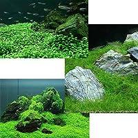 (水草 熱帯魚)前景 水上葉(無農薬)3種 グロッソスティグマ(1)+キューバパールグラス(1)+ヘアーグラス ショート(1) 本州・四国限定[生体]