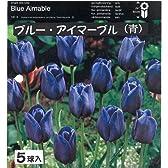 一重咲きチューリップ球根(青) ブルーアイマーブル