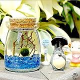まりもモスボールでガラスJar byルフィ:にはゴージャスなグリーンMarimo、海ファンと美しいブルーPebbles–Meaningfulギフト–Symbol Of Love &低メンテナンス–Adds Serenityをホームコーナー