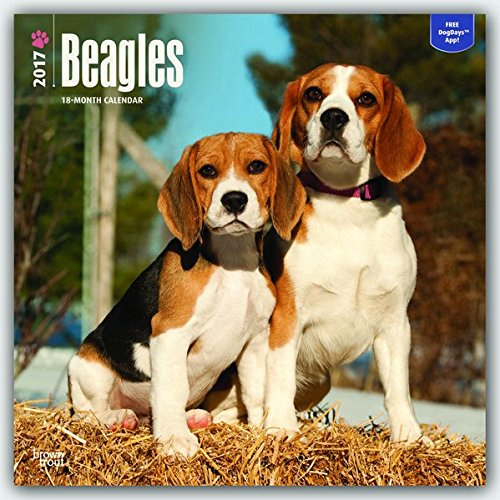 Beagles 2017 Calendar