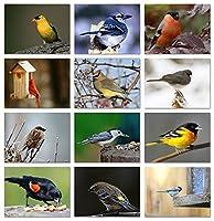"Song Birdグリーティングカードwith識別カード–12異なる鳥–空白を内側–5.5"" X 4.25"" 24 Pack"