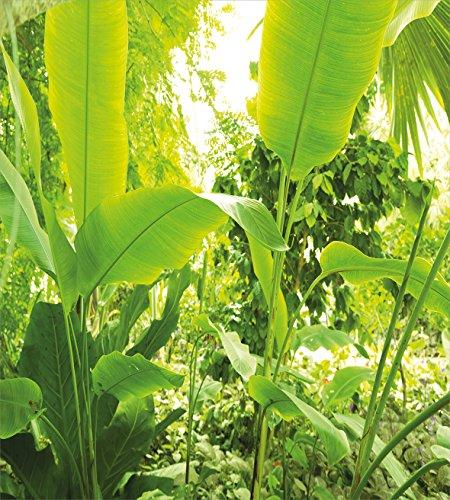 リーフ布団カバーセットby Ambesonne、Brazilian Rainforest BotanicデザインTrees Leaves Natureテーマフォト、装飾寝具セットのピロー、フォレストグリーンとAppleグリーン QUEEN / FULL nev_36041_queen