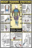 Weight Training Stretches 61cm X 91.4cm Laminated Chart