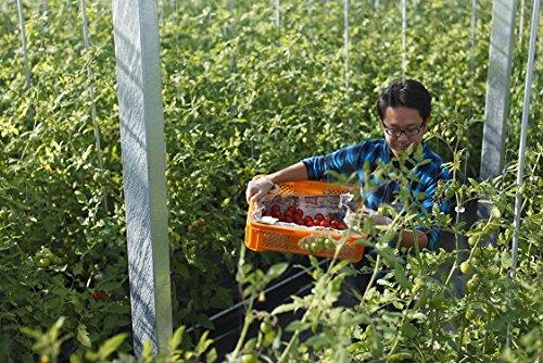 高糖度「おもいろトマト」のトマトジュース トマト100% 水・食塩・糖類等は一切不使用 「トマトジュースは...