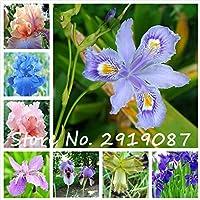混合:100個アイリスの種、アイリスの蘭の種、家庭菜園のための豪華なカットの花の希少な蘭の種、希少家宝のTectorum Perenn