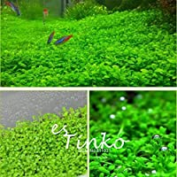 1000ピース水族館草の種子水草水生植物の種子水族館の装飾工場