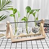 Hydroponic Vase Plant Terrarium Wooden Stand, Hanging Flower Vase Desktop Glass Planter Bule Vase for Hydroponic Plants, Home