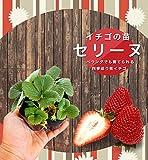 いちご 苗 【四季成り性】セリーヌ 3号ポット苗 【小梱包】イチゴ 苺