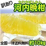 【訳あり】/愛媛県産 河内晩柑 約10kg/(美生柑・宇和ゴールド)