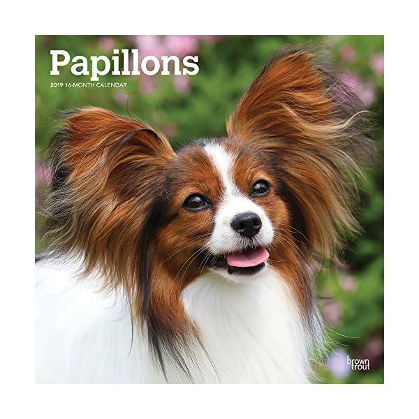 Papillons 2019 Calendarの商品画像