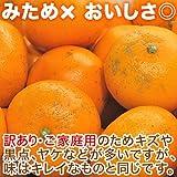 せとか 訳あり 5kg 愛媛県産【幻の柑橘】