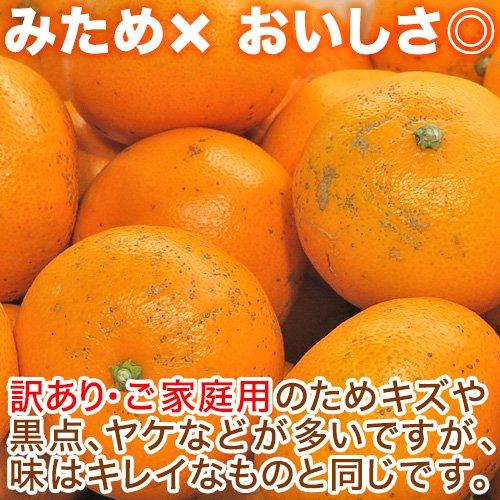 【送料無料】訳あり せとか 5kg 愛媛県産【幻の柑橘】